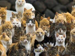 İsrail Tarım Bakanı Uri Ariel sokak kedilerine isyan