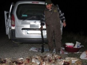 16 yaban tavşanını vuran 4 kişi yakalandı