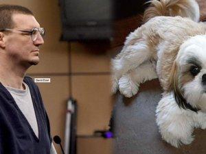 Adam köpeği ısırdı, 1 yıl hapis cezasına çarptırıldı