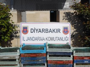 Diyarbakır'da 'kurbağa' kaçakçılığı: 5 gözaltı