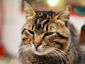Duygularımıza göre kedilerin de davranışları değişiyor