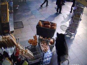 Şehre inen domuz Beykoz'u karıştırdı