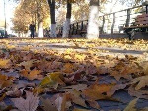 Dökülen çınar yapraklarına hücum ettiler