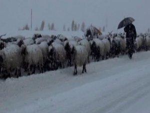 Tipiden dolayı mahsur kalan çobanlar ve 3 bin koyun kurtarıldı