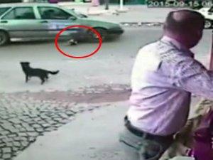 Köpeği ezip kaçtı!