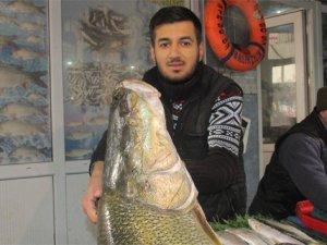 Elazığ'da dev turna balığı yakalandı