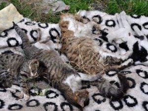 Bursa'da kedi katliamı