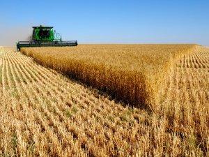 Tarım ÜFE Kasım'da arttı