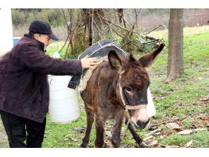 Evine, Eşekle Su Taşıyor