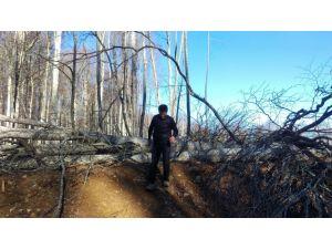 CHP'li Sarıbal: Rüzgar enerji santrali için ağaç katliamı yapılıyor