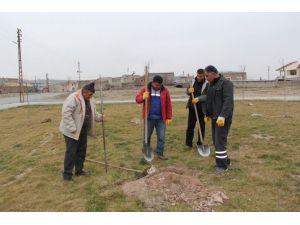 İncesu Belediyesi Yeşil Bir İncesu İçin Ağaçlandırma Çalışmalarına Devam Ediyor
