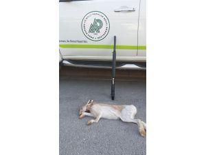 Vurdukları 1 tavşan için araçlarından oldular