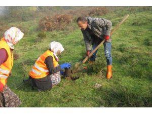 Gölyaka'da Ağaçlandırma Çalışmaları Tamamlandı