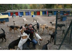 Hayvansever Oyuncudan Tatil Yöresindeki Barınaklara Tepki