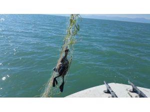 Göle Serilen Hayalet Ağlar Su Kuşlarını Da Avlıyor