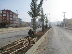 Beyşehir'de Yeşillendirme Çalışmaları Sürüyor