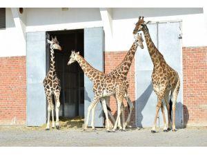 İzmir'in en uzun boylu ailesinin fertleri birarada