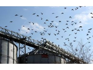Binlerce Kuşun Görsel Şovu