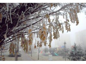 Kayseri'de aşırı soğuklardan ağaçlar beyaza büründü