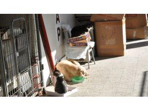 Kediyle Köpeğin İmrendiren Dostluğu