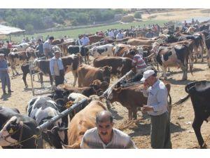 Kâhta Hayvan Pazarı 1 ay süreyle kapatıldı