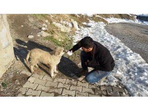 Kar Ve Soğuk Hava Sokak Hayvanlarını Vurdu