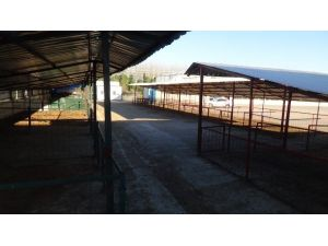 Doğu Marmara'nın En Büyük Hayvan Pazarı 'Şap Hastalığı' Nedeniyle Kapatıldı