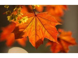 Kireçlenmeden Çınar Yaprağı İle Kurtulun