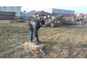 Kütah'ya'da Köpek Ölümü