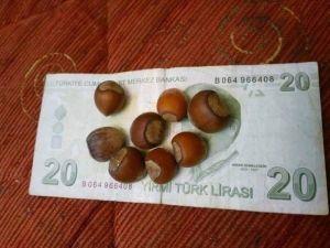 Fındık Üreticisinin '20 Lira' Esprisi