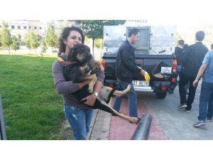 Öğrenciler, Sahipsiz Köpeklerin Toplanmasına Yardım Etti