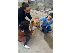 Lise öğrencileri yapıp-sattıklarıyla sokak hayvanlarına mama aldı