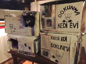 Sokak Kedileri İçin Kedievi Yaptılar