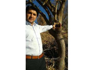 Ağaca Asılan Kutudan İletişim