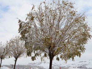 Havza'da kar yağışı sonrası kartpostallık görüntüler