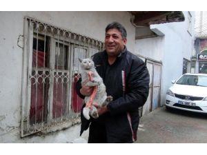 20 Yıldır Sokak Kedilerini Besliyor