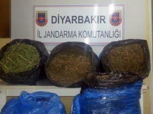 Diyarbakır'da 42,5 Kilogram Esrar Ele Geçirildi