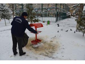 Sokak hayvanları ve kuşlar için yem bırakıldı