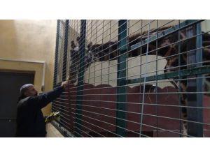 Hayvanlar kışlık barınaklara alındı
