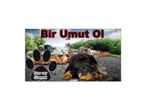 Hayvanseverler Siverek'te sokak hayvanları için kampanya başlattı