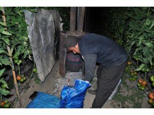 Antalya'nın Domateslerini Ambargodan Sonra Don Vurdu
