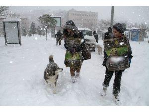 Sokak hayvanlarının aç kalmaması için 400 kilo kedi ve köpek maması dağıtıldı