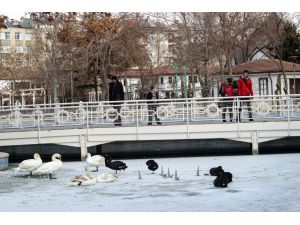 Konya'da süs havuzları donunca kuğular buz üstünde kaldı