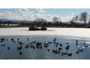 Mogan Gölü'nün üzeri buz tuttu, kuşlar yüzebilecekleri alanda toplandı