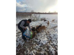 Soğuktan Aç Kalan Sokak Hayvanları Unutulmadı