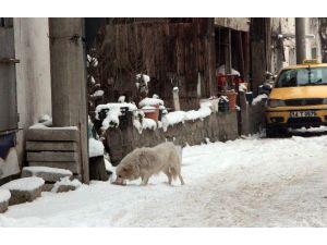 Bolu'da Sokak Hayvanlarına Mama Bırakıldı