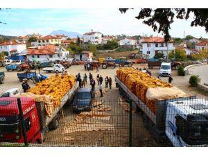 Büyükşehir'den Çiftçilere Patates Tohumu Desteği