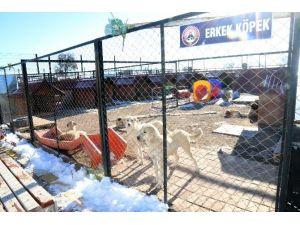 Aksaray Belediyesi, Sahipsiz Hayvanlara Hizmet Veriyor