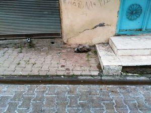 Siverek'te köpek soğuktan donarak öldü