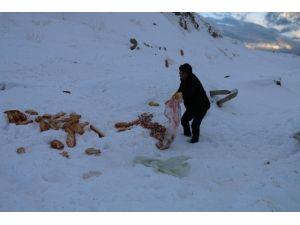Edremit Belediyesi Sokak Hayvanlarını Unutmadı